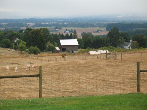 The view from Accoyo Norte at Pacific Crest Alpacas